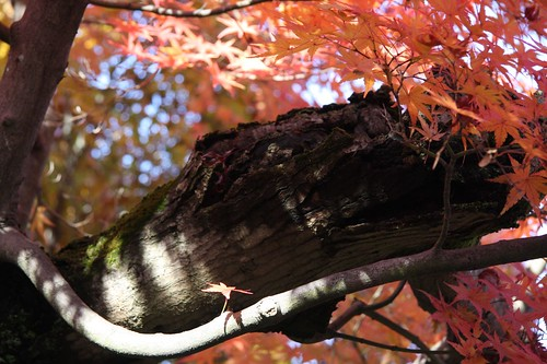 Autumn Colors at Tofuku-ji Temple