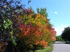 Fall Colors Boulder   DSCN0099