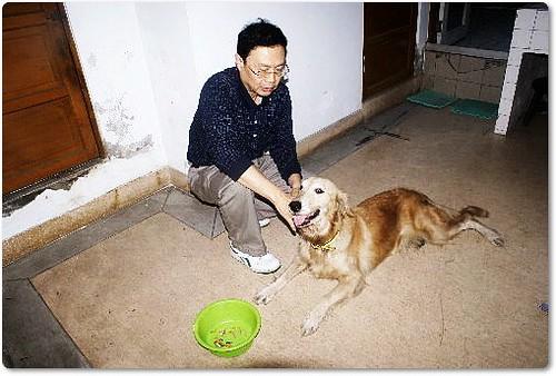20091205「募資源與認養」台中五權路加油站附近~拾獲的黃金獵犬目前不夠錢醫治心絲蟲~懇請贊助也可以認養喔