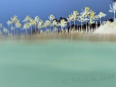 Watercolor (lindilindi) Tags: ocean blue trees blur color green art beach water watercolor print hawaii bay blurry aqua underwater wave maui palm half kapalua gr split inverted effect gs hawaiimelindapodorlindilindicopyrightdonotusewithoutpermission gettyvacation2010