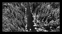 Ammerschlucht (art180) Tags: schnee winter white black bayern view grau christian bach valley aussicht brcke fluss weiss oben unten blick schwarz tal schlucht gebirge tannen ammer weis sturz tief strzen nadelbaum michelbach voralpenland nadelbume echelsbach art180 echelsbacher