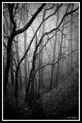 Tree & smog (MarqueXX D90) Tags: wood shadow blackandwhite tree blancoynegro blanco forest dark landscape arbol smog nikon negro bn niebla jarandilla nikond90