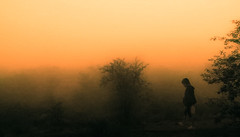 Walk (nandadevieast) Tags: travel india fog maharashtra ratnagiri anuragagnihotri nandadevieast