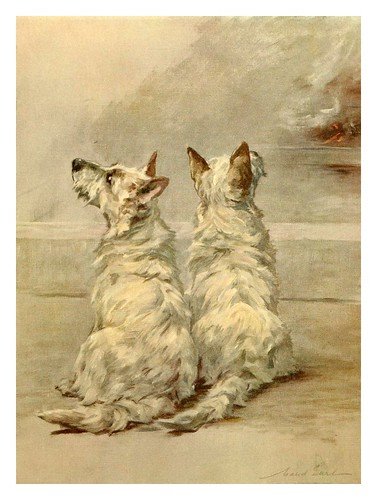 015-Terrier blancos del oeste de Escocia-The power of the dog 1910- Maud Earl