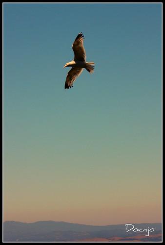 Volar......