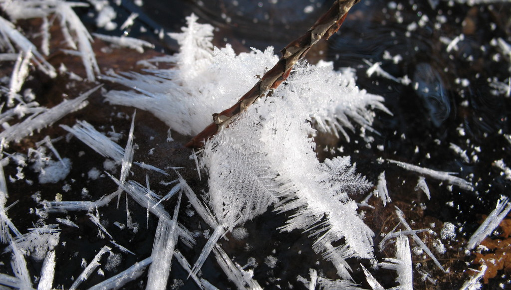Feather or frost?