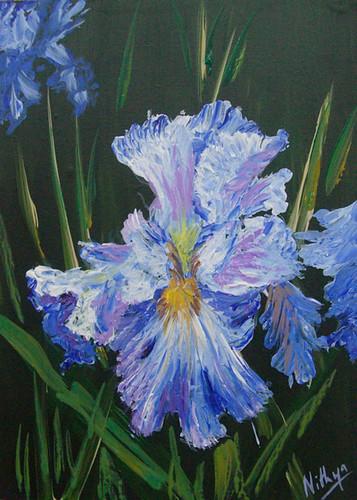 Ultramarine Iris