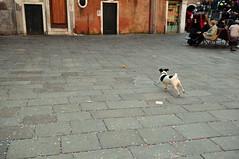 CSC_0569 (justindelaney) Tags: venice italy venizia