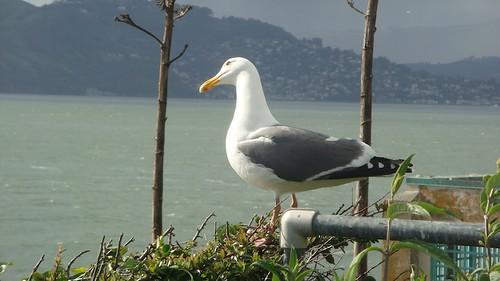 Dominando Alcatraz