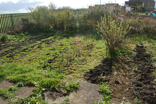 Marley Hill allotment Apr 11 2