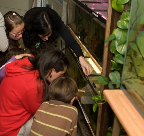 ¿Y eso son las crías?, Beatriz muestra la puesta de los apistogramas.