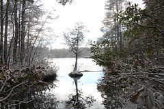 Wells Mills Trail, NJ (elisecavicchi) Tags: detail reflection tree pool evergreen pinelands pine barrens national reserve snow winter february sky placed flawless glow bright frame wells mills new jersey nj