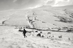 Cold tranquility (Gareth Priest) Tags: bw highcontrast snow winter mountain valleys horses portrait landscape silhouette