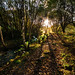 Into The Light - Royd, Meltham