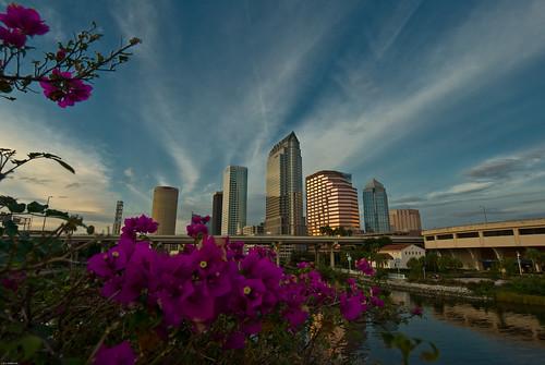 Tampa Skyline-2