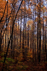 Fall foliage (JoeCroos) Tags: fall maryland foliage dickerson canonef1740mmf4lusm