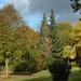 Back Garden: October 30