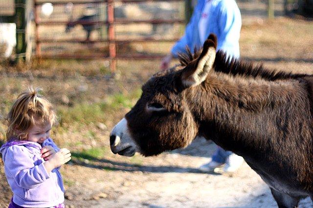 abby and donkey