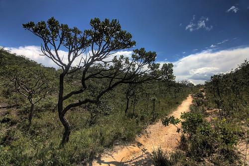 blue brazil dirt green MG path plants Serra do Cipó sky tree