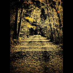 Dark Lane