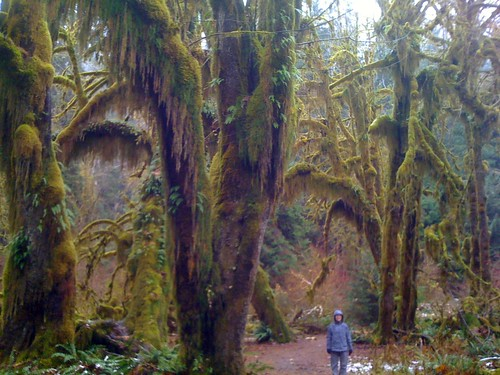 Emily in the Hall of Mosses, Hoh Rain Forest