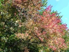 Fall Colors Boulder   DSCN0102