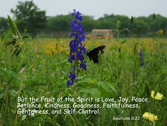 Words to Live By! (JackieG...) Tags: flowers nature butterfly texas wildflowers pleasanton april2007 galations522