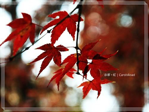 2009-12-11 京都 034 R