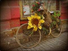 A Sunflower (JoannaRB2009) Tags: street people architecture buildings poland polska lodz d supershot topseven abigfave piotkowska theunforgettablepictures