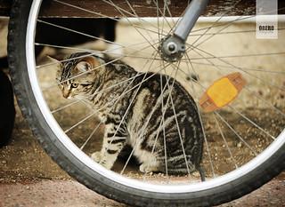 De gatos que se esconden tras las ruedas ...