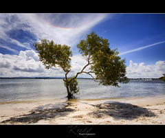 Somewhere under the Rainbow (Reedy Photography) Tags: water clouds rainbow arc mangrove epic southstradbrokeisland canon1022mm circumzenith reedyphotography