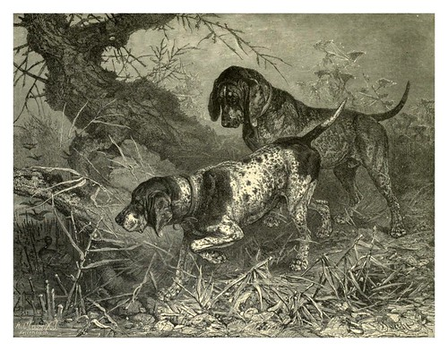 006-Pointers alemanes-The illustrated book of the dog 1881- Vero Kemball Shaw
