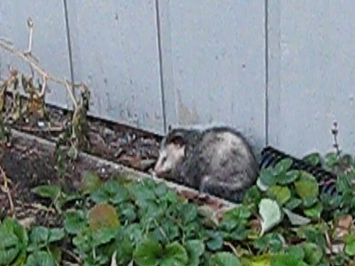 Sad kitty?
