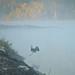 Blue Heron on the Mississippi River at Sunrise