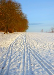 winter- sport Skispuren  Maronenweg Tbingen (eagle1effi) Tags: snow germany landscape deutschland landscapes hiking paysage landschaft tuebingen paysages wandern picnik landschaften tbingen tubingen schneelandschaft wrttemberg badenwuerttemberg tubinga horemer exacthybridgeomapped lumixbest dibenga stadttbingen maronenweg beautifulcityoftubingengermany beautifulcityoftbingengermany