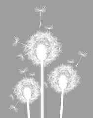 Windblown Wishes - Gray and White (3LambsStudio) Tags: plant flower nature childhood silhouette illustration graphicart yard photoshop print botanical hope design graphicdesign kid artwork weed vectorart child forsale graphic wind photoshopped digitalart dream puff seed wallart blow dandelion botanic etsy wish breeze botany vectors vector tuft available parachute makeawish printwork photoshopedited photosforsale onetsy editedinphotoshop graphicprint graphicartprint 3lambsdesign madewithphotoshop editedonphotoshop 3lambsgraphics