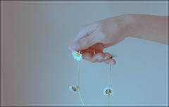 (Laura Galley) Tags: blue light boy flower art childhood daisies soft hand touch feel pale daisy delicate fragile hue lightness daisychain bluetones lightnessofbeing kindofblue lauragalley lgphotoart somethingsammade