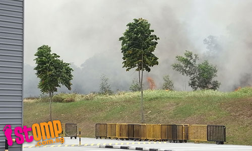 Bush fire rages at Expo area