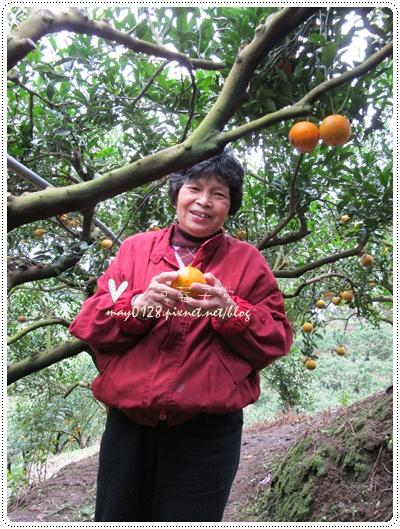 關西採草莓橘子牛欄河2010.02.20-25