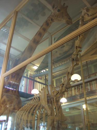natural history boston