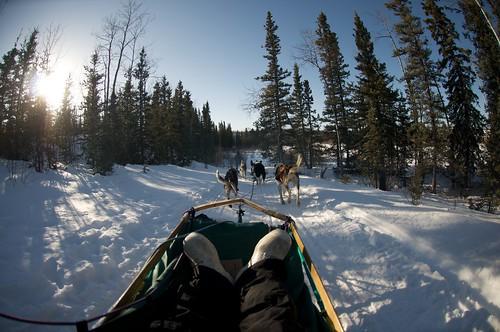 Yukon Day Experience