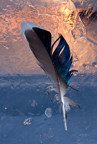Feather in Ice at Sunset