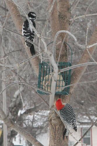 new neighbors - two