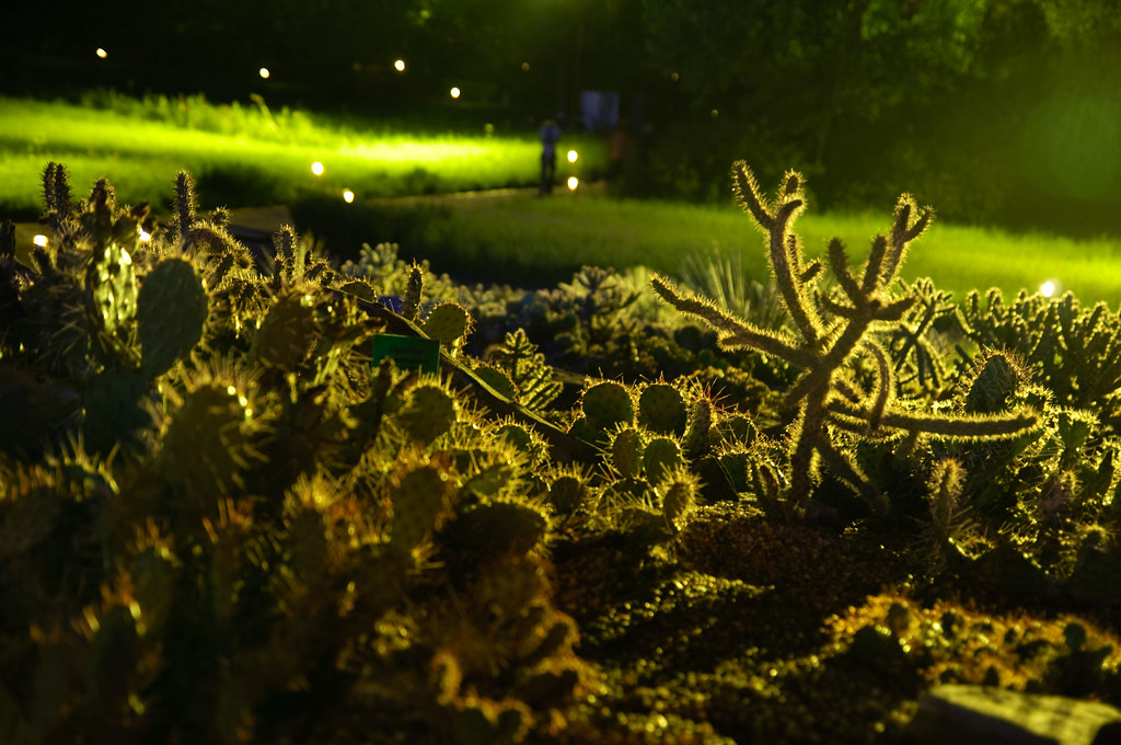 cacti attack