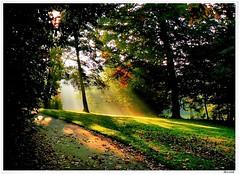 Et la lumire fut! (jackfre2) Tags: park trees light red green leaves sunshine day belgium path lawn antwerp flanders filtering mybestfriend wilrijk filteringlight steytelinck steytelinckpark mygearandmebronze mygearandmesilver mygearandmegold mygearandmeplatinum mygearandmediamond