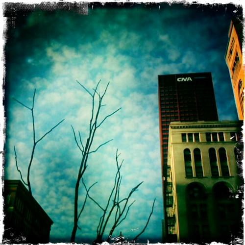 Tree, sky.