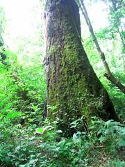 RIMG6003-563x750 (Weltbummler) Tags: yerbabuena tucumn bosquenublado nuboselva