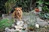 Jacky im Garten