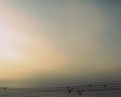 peace (erinold) Tags: sky black peace cloudy cable ég thrush fekete rigó borús kábel békés
