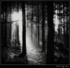 Sonnenaufgang - morning sun (NPPhotographie) Tags: wood light bw sun tree art nature forest sunrise germany ray creative cologne oberberg sunray platinumphoto theunforgettablepictures platinumheartaward platinumsuperstar vanagram artofimages bestcapturesaoi magicunicornverybest magicunicornmasterpiece elitegalleryaoi